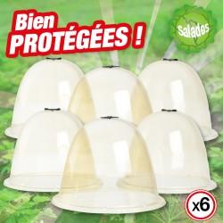 outiror-Lot-6cloches-salades-113611200019-V2.jpg