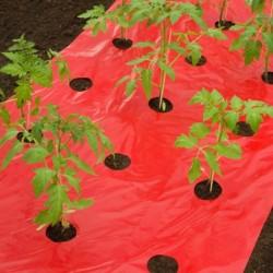outiror-film-de-paillage-tomate-0-95x5m-141301190003-3