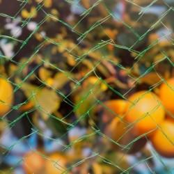 outiror-filet-anti-oiseaux-mono-filament-8x8m-141301190074-3